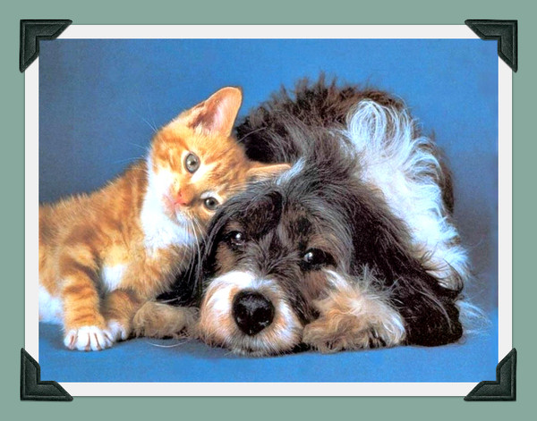 Chiens - Com chien et chat ...