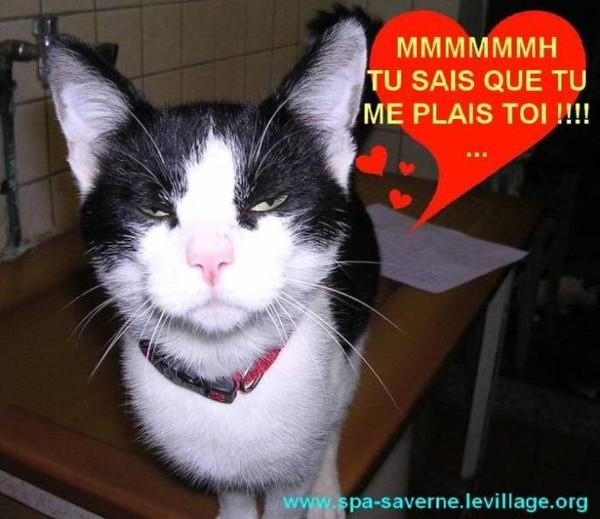 Chat rigolo - Photo de chat rigolo ...