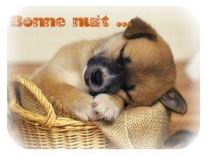 """Résultat de recherche d'images pour """"bonne soirée et bonne nuit chien"""""""