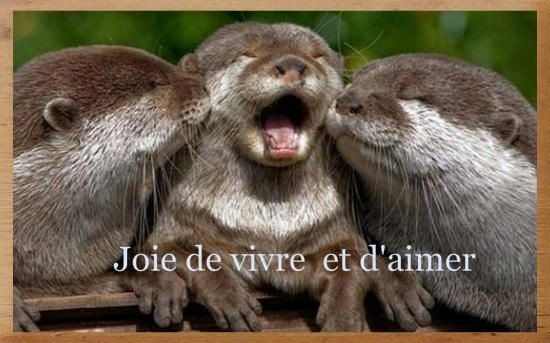 Joie animale