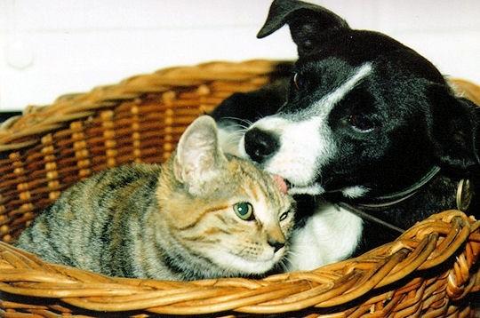 Comme chien et chat ?