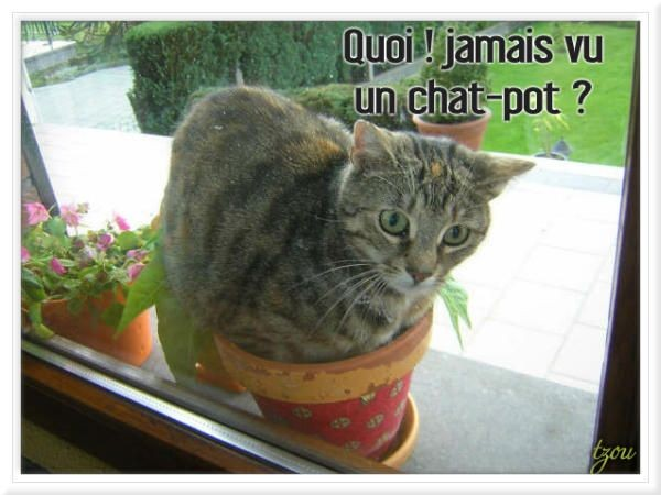 Topic des chats - Page 32 C575da08