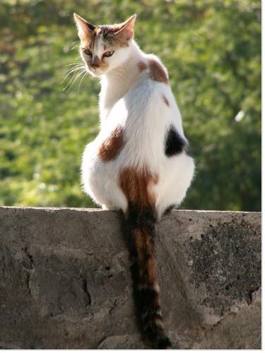 """Résultat de recherche d'images pour """"chat sur le mur"""""""