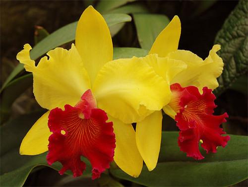 """Résultat de recherche d'images pour """"orchidées"""""""